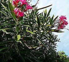 Oleander by Art-Motiva
