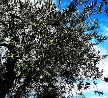 Olive tree by Art-Motiva
