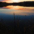 Dark reeds by Alex Call