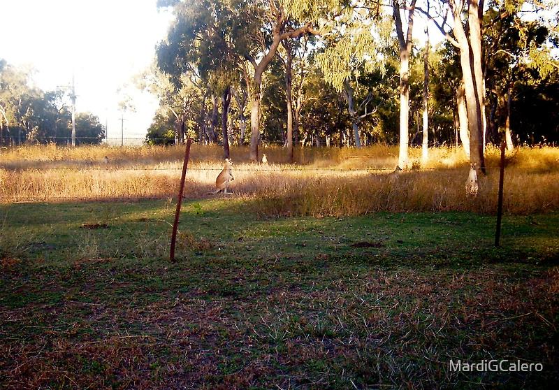 Little Kangaroos at  Mums' Gate by MardiGCalero