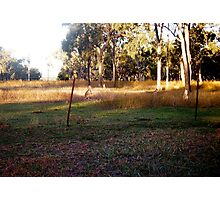 Little Kangaroos at  Mums' Gate Photographic Print