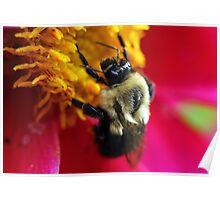 Pollen Crown Poster