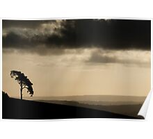 Lone tree at dawn Poster
