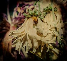 Wilting Away by Cynthia Broomfield