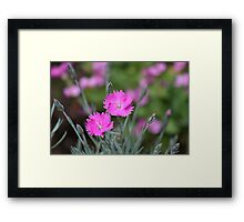 Pink summer flowers Framed Print