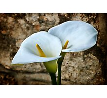 Calla Lilies Photographic Print