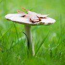 Oak Leaf on a Mushroom by Daisy-May