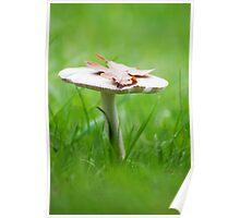 Oak Leaf on a Mushroom Poster