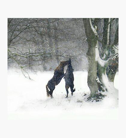 Snow fight Photographic Print