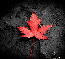Red Solo.....LEAF! by Tony Hagan