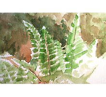 Fern Hands Photographic Print