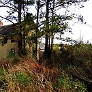 Abandoned Shelters of Dorchester County, Maryland_3 by Hope Ledebur