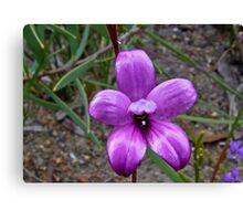 Enamel Orchid Canvas Print