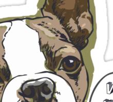 Boston Terrier Wicked Pissah Sticker