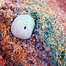*Rainbow Seashell by GoldenRectangle