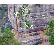 Blooms Among the Stones Photographic Print