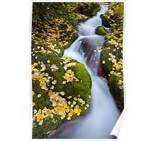 Boulder Brook, Rocky Mountain National Park Poster