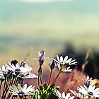 Wild Flowers by NinaJoan