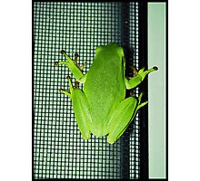 Frog on the screen Photographic Print