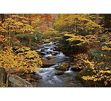 fall in the smoky mountains Photographic Print