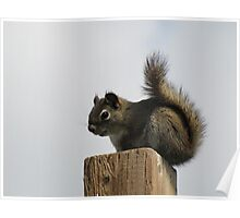 Oh look - a squirrel! Poster