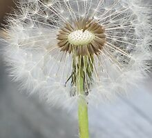 Make a Wish by Kathi Arnell