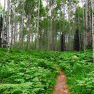 Kebler Pass Ferns by Ryan Wright