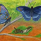 Blue Butterflies - Watercolor Pencil Drawing by Melissa Rogers