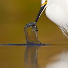 Snowy Egret  by Bryan  Keil