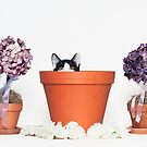 Black and White Kitten in a Flower Pot - Animal Rescue Portraits by AndreaBorden