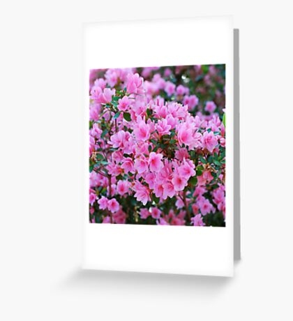 Azalea Bunch Greeting Card