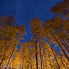 Glowing Aspens by Ryan Wright