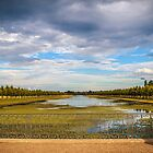 Hampton Court's lake by MarceloPaz