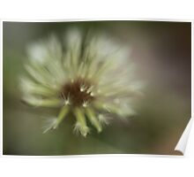 Abstract Dandelion Poster