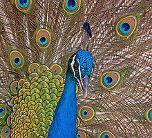 I CALL THIS NBC lol (Peacock) by imagetj