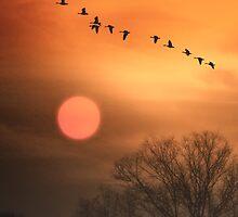 HOT SUMMER FLIGHT by TOM YORK