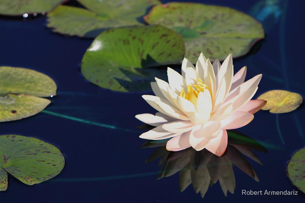 Myra Water Lily by Robert Armendariz