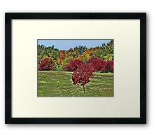 Natures Paint Brush Framed Print