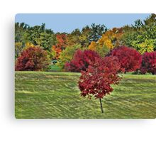Natures Paint Brush Canvas Print