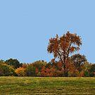 Autum's Tree's by Linda Miller Gesualdo