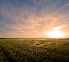 Wheat fields by luciaferrer