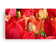Tulips bursting with red Canvas Print