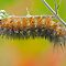 Upside down caterpillar on a rainy day by Bonnie T.  Barry