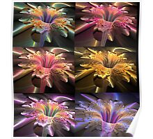 6 flower fractals orchis Poster