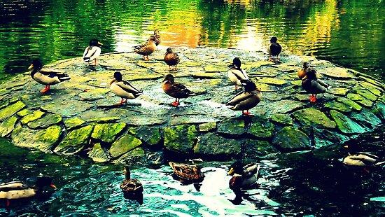Duck Island by dawnandchris