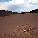 Dune by Ryan Wright