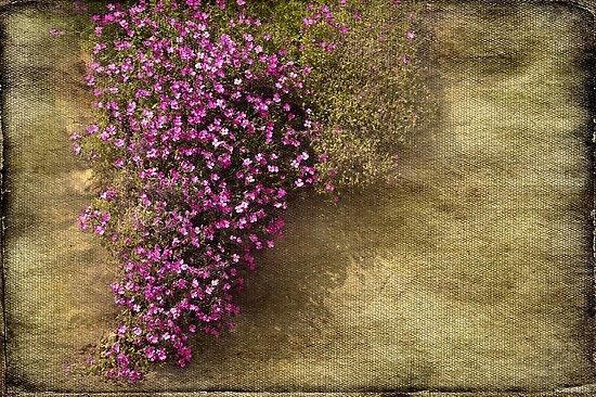 Lilac Branch by Svetlana Sewell
