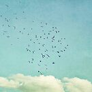 September Sky by beverlylefevre