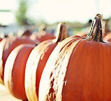 pumpkins by beverlylefevre