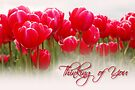 Thinking of You - Tulips Greeting Card by Tracy Friesen